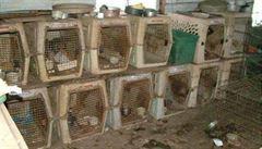 Množírny psů jsou problémem, uznává ministerstvo. Chce registrovat chovy