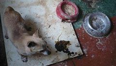 Štěňata se pašují jako kabelky, v přepravkách jich umírají tisíce, říká veterinářka