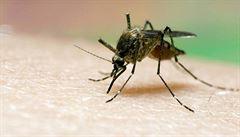 Čína chce Africe pomoci v boji s malárií, šlechtí vzácný pelyněk