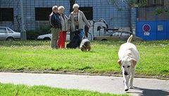 Psí výkaly ohrožují lidi i zvířata