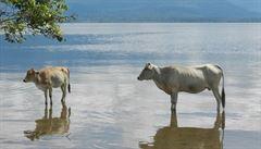Centrální Sulawesi: Na skútru skrz džungli