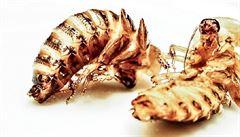 Energetické tyčinky i těstoviny. Přidávání hmyzu do jídla je nový trend, navíc ekologický