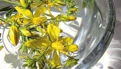 Při opalování mohou i léčivé bylinky uškodit, pozor na třezalku