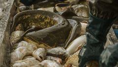 Vědci budou zkoumat chování ryb při práci těžké techniky v korytě
