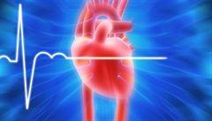 Zeptali jsme se vědců: Jak vzniká srdeční pulz a jakou roli při tom hrají jednotlivé ionty?