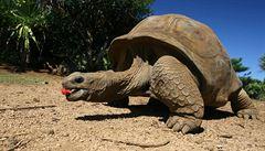 Na Galapágách objevili vědci nový druh obří želvy