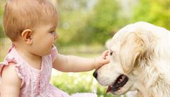 Psi zpracovávají zvuky podobným způsobem jako lidé
