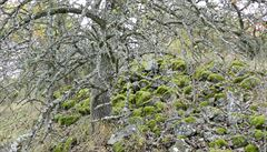V mlze se rýsuje odraz keltské slávy. Objevte nejstarší umělé jezírko v Česku