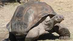 Vědci objevili genetický kód vyhynulých želv