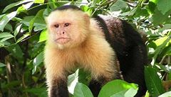 Opice jako symbol obchodu se zvířaty v Chile. Lidé je vedou k závislosti na alkoholu nebo kouření