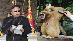 Ptejte se Severokorejce: Mají v KLDR domácí mazlíčky? Pozor na záludné opice!