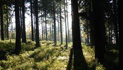 Lesy ČR zvýšily zisk o tři procenta. Odvedly pak víc do státního rozpočtu