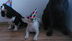 Má váš pes narozeniny? Objednejte mu dort na oslavu v parku a hovězí k večeři
