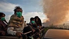 Česká vzpoura proti palmovému oleji. Tisíce lidí chystají bojkot některých firem