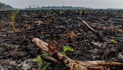 Všudypřítomný nepřítel. Do čtyř let se má produkce palmového oleje zdvojnásobit