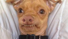 Šišlavý psík Ftefan ovládl YouTube. Kampaň na 'Fofolu' opět bodovala