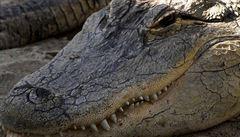 VIDEO: 'Bylo složité přimět aligátora vdechovat helium.' Vědci si za neobvyklé pokusy rozebrali Nobelovy anticeny