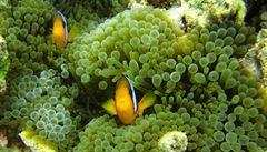Austrálie chce s pomocí vědců zachránit Velký bariérový útes