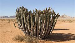 Pokud oteplování bude pokračovat, část Španělska se změní v poušť, tvrdí vědci
