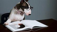 Fenomén psi: inspirují designéry a vydělávají milióny