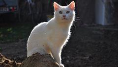 Izraelský ministr chce deportovat toulavé kočky do zahraničí