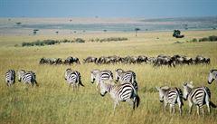 Po stopách divokých zvířat na safari v Keni aneb velká migrace zblízka