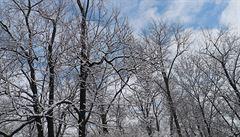 Předpověď čeká běžné lednové počasí. Přes den mírně nad nulou, mrznout má v noci