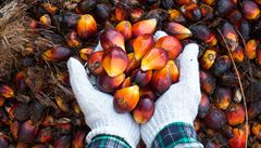 Čeští obchodníci se zbavují palmového oleje. Z etických důvodů