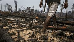 Nové plantáže palmy olejné? Hořící pralesy, žlutý dým a mrtvá zvířata