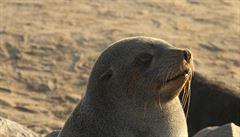 BBC nabídne uklidňující pořad o zvířatech. Provádět jím bude buddhistický mnich