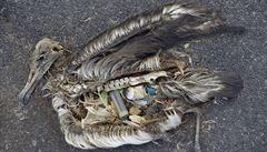 Zapalovače a sáčky v žaludcích želv a ptáků. Plast devastuje mořské ekosystémy.