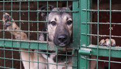 Pes v nouzi: Jsme národ pejskařů a zvířat v útulcích je nám líto. Přesto jsou plné