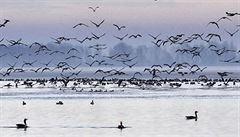 V Česku ubývají ptáci, nejvíce na polích a loukách