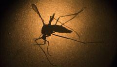 Virus zika v Německu. Od loňského října je zaznamenáno pět případů