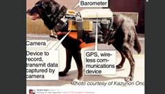 Japonští vědci vynalezli robopsa. Má usnadnit práci záchranářům