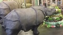 Samička nosorožce oslavila druhé narozeniny. Za rok přibrala 400 kilogramů