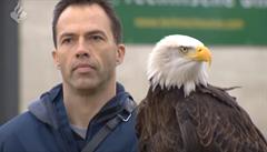 Nizozemská policie vycvičila dravce k lovení nebezpečných dronů