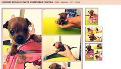 Prodej psů na webu: inzertní portály jsou plné pochybných nabídek neduživých štěňat