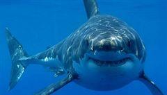 Čtrnáctiletou surfařku napadl žralok, zahnala ho prknem