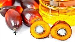 ZVĚŘINA: Podléháme hlouposti. Lež o škodlivém palmovém oleji slouží ideologům