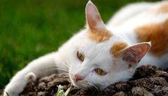 Na Kypru nestačí uživit statisíce přemnožených koček