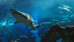Lovící žraloci poslouží jako inspirace pro konstruktéry robotů