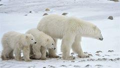 Zvířata na změnu klimatu nereagují včas, hrozí i vyhynutí, varují vědci
