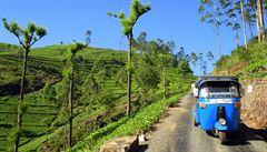 Exotické pláže, drzé opice a čajové plantáže. To vše má Srí Lanka