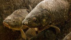 Mladí vědci dostali stipendia na výzkum ryb i rakoviny