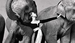 Kniha Dior by Avedon mapuje spolupráci legendárního fotografa Avedona