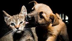 Kočka a pes v jednom bytě? Žádný problém, pozor dejte při krmení