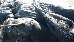 V Mexiku moře vyplavilo podivného tvora. Je to hlava vorvaně, zjistili vědci