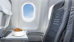 Se psem i kočkou. Stále víc lidí cestuje letadlem i s domácím mazlíčkem