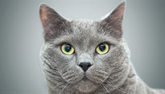 Veterinář: Selhávání ledvin u kočičích seniorů. Prvním příznakem je nadměrná žízeň